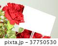 カーネーション 花 母の日の写真 37750530