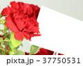 カーネーション 花 母の日の写真 37750531