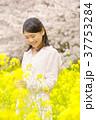 女性 菜の花 菜の花畑の写真 37753284