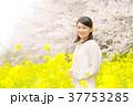 桜 女性 菜の花の写真 37753285