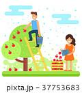 りんご リンゴ 農作物のイラスト 37753683