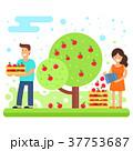 りんご リンゴ 農作物のイラスト 37753687