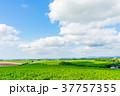 【北海道】自然イメージ 37757355