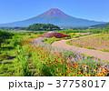 富士山 山 青空の写真 37758017