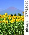 富士山 花の都公園 花畑の写真 37758040