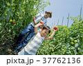両親 男の子 畑の写真 37762136