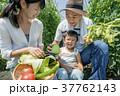 両親 男の子 笑顔の写真 37762143
