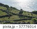風景 放牧 海の写真 37776014