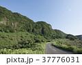 風景 山 道の写真 37776031
