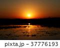 イベラ湿原 37776193