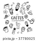 Cactus Illustration pack 37780025