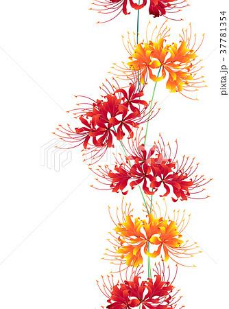 日本的な彼岸花の柄のイラスト素材 37781354 Pixta