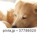 犬 寝る 戌年 2018 37786020