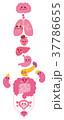 内臓 キャラクター イラスト 37786655