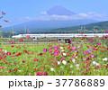 富士山 山 水田の写真 37786889