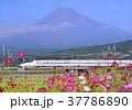富士山 山 水田の写真 37786890