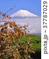 富士山 岩本山 秋の写真 37787029