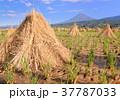 富士山 晴れ 秋の写真 37787033