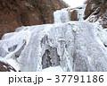 袋田の滝 氷瀑 凍結の写真 37791186