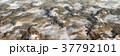 鮮豔細緻的湖泊和山脈高地景觀,全景鳥瞰圖:雪山(高分辨率 3D CG 渲染∕著色插圖) 37792101
