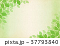 フレーム 春 新緑のイラスト 37793840