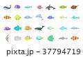 サカナ 魚 魚類のイラスト 37794719