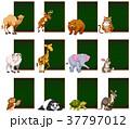 動物 トロピカル 熱帯のイラスト 37797012