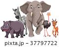 動物 しまうま シマウマのイラスト 37797722