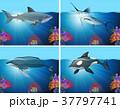 サメ シャーク 鮫のイラスト 37797741