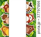 野生動物 野生生物 動物のイラスト 37797866
