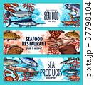 シーフード 海の幸 魚介類のイラスト 37798104