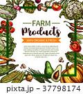 野菜 スケッチ 図案のイラスト 37798174