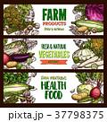 野菜 スケッチ 図案のイラスト 37798375