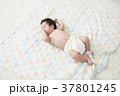 3ヶ月の赤ちゃん 37801245