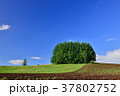風景 丘 畑の写真 37802752