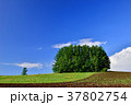 風景 丘 畑の写真 37802754