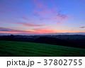 風景 丘 麦畑の写真 37802755