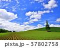丘 青空 畑の写真 37802758