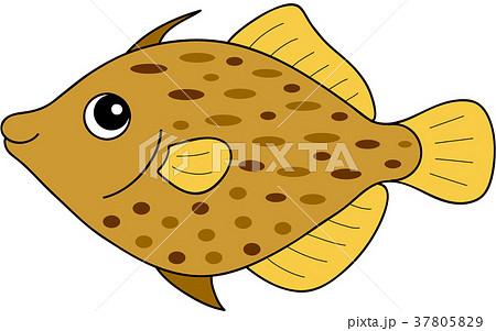 ハギ Thread-sail filefish 37805829