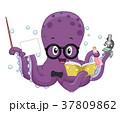 タコ たこ 蛸のイラスト 37809862