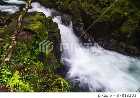 柿窪滝(赤目四十八滝) 37813203
