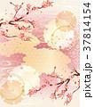 桜 金 和柄のイラスト 37814154