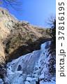 袋田の滝 冬 滝の写真 37816195