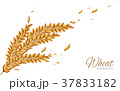 wheat elements design 37833182