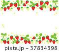 苺 果物 果実のイラスト 37834398