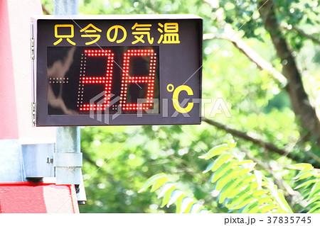 猛暑 37835745