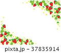 苺 果物 果実のイラスト 37835914