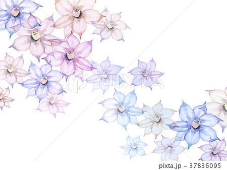 春 夏 花 背景 クレマチス 水彩 イラストのイラスト素材 37836095 Pixta