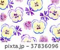 パンジー 花 水彩画のイラスト 37836096