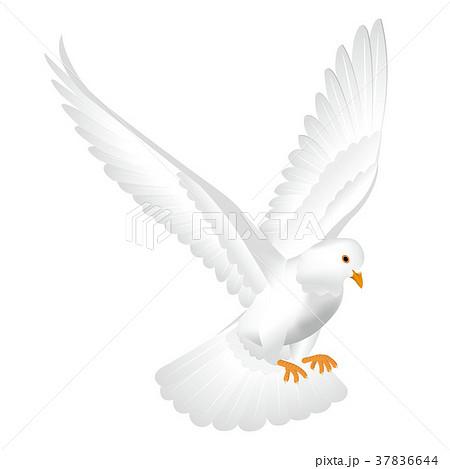 白い鳩 37836644